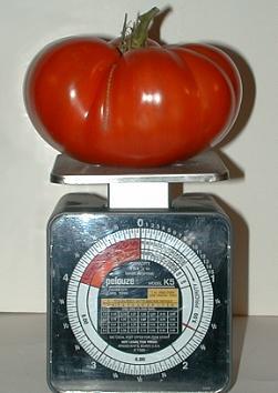 Beefsteak Tomato 1Lb 10oz.