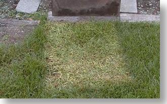 Lawn not treated with BioVam will yellow up when covered with an object for a day or two.