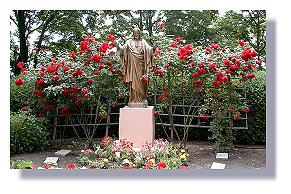 BioVam treated Roses at Mount Saint Michael.