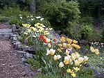 Flowers at Mt. Saint Michales.