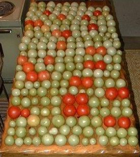 215 Tomatoes in final harvest from one Early Girl plant