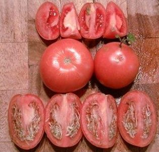 Sprouted tomatoes.