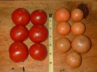 14 month old tomatoes on right.